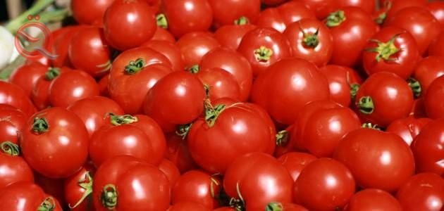 Agriculture: continue to prevent the import of tomato crop and are not responsible for the entry of the importer 11741