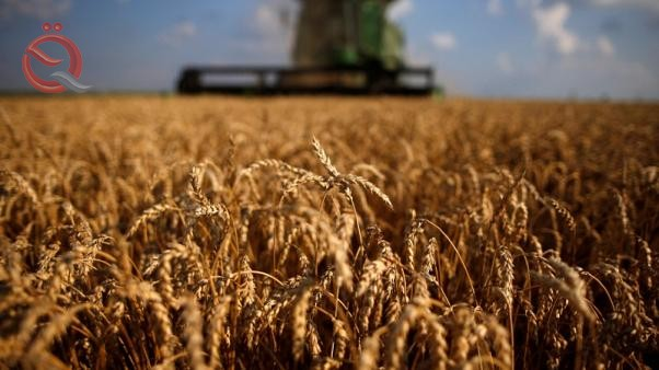 Dealers: Iraq buys 50 thousand tons of American wheat in a tender 11792