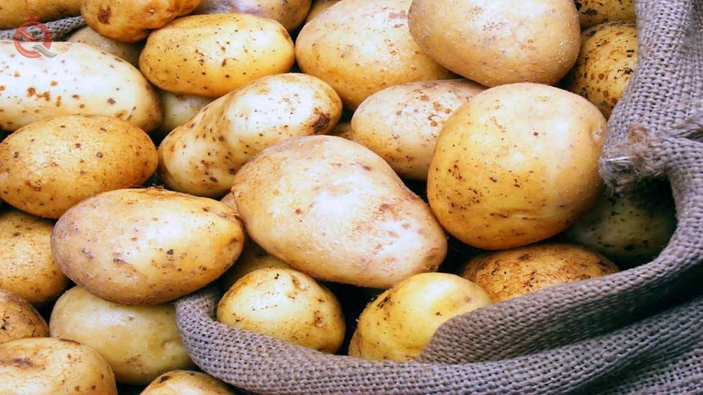 Agricultural statistics: potato production in Iraq decreased by 37.9% in 2018 13248