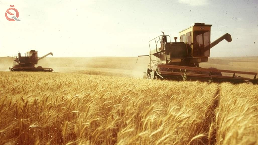 Minister of Commerce announces the marketing of nearly one million tons of local wheat 15185