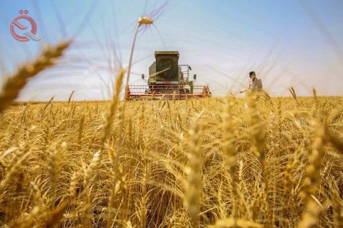 Agriculture: Marketing more than 27 thousand tons of wheat and barley in Karbala 15301