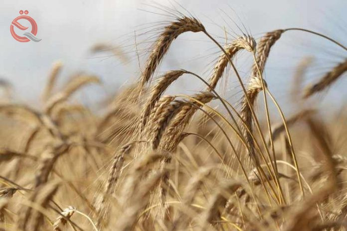 Agriculture expects to harvest 1.4 million tons of barley in Nineveh 15411