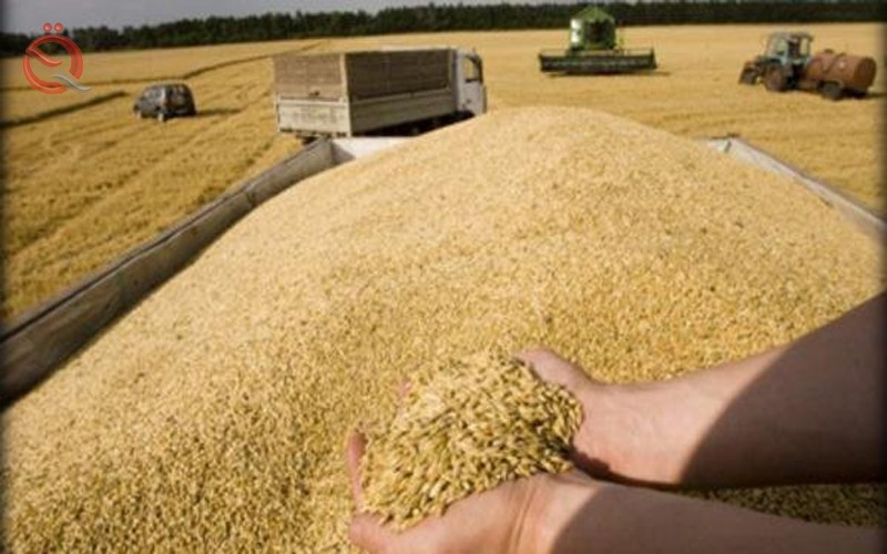 Trade announces the end of marketing campaign wheat crop in nine provinces 15595