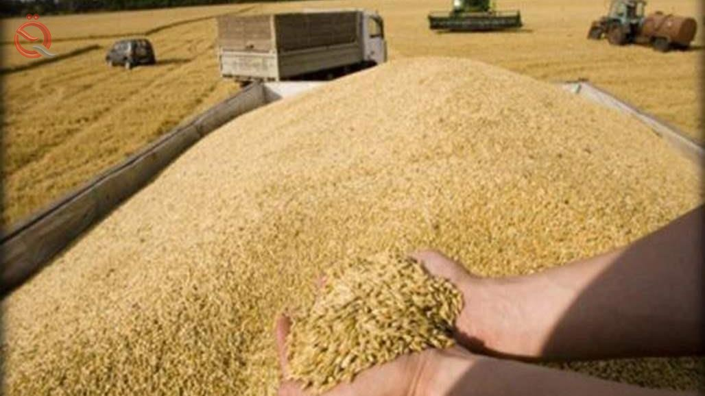 Agriculture declares self-sufficiency of wheat crop 15623