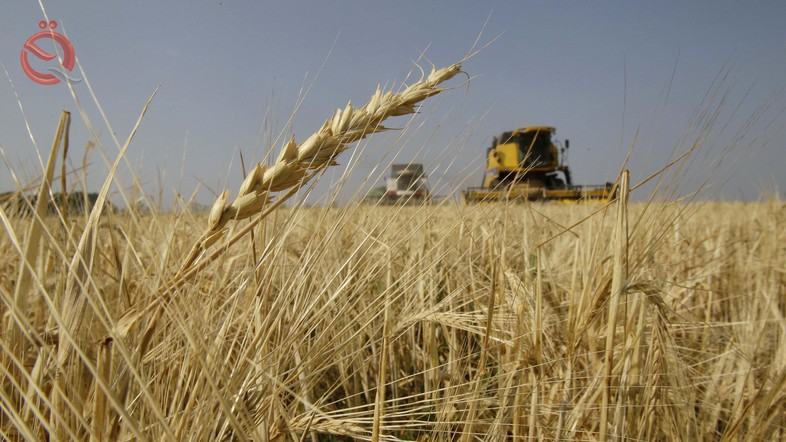 Agriculture announces an increase of 300 thousand tons of wheat production in nine provinces 15716