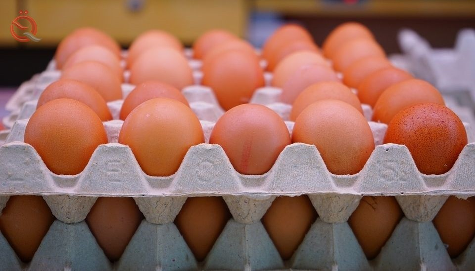 The Committee on Agriculture threatens the investor to open a partial outlet for imported table eggs 15966