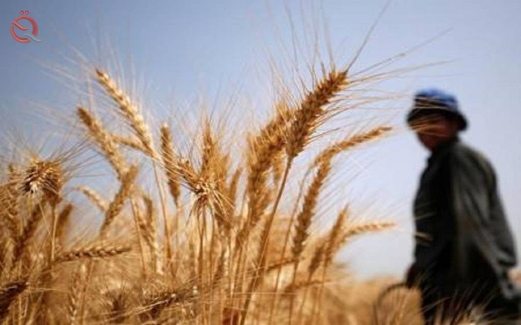 Iraq buys about 4 million tonnes of domestic wheat 16097