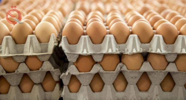 Dhi Qar intends to achieve self-sufficiency of table eggs 16991