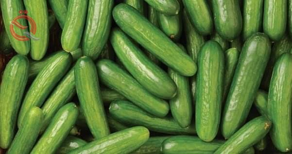 Agriculture: Continuing to prevent importing cucumber crops for their abundance in local markets 17009