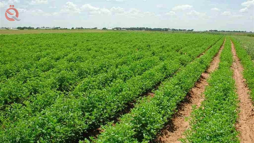 Central Bureau of Statistics: The area of ​​cultivated land in Iraq is 6.27 million dunums 17455