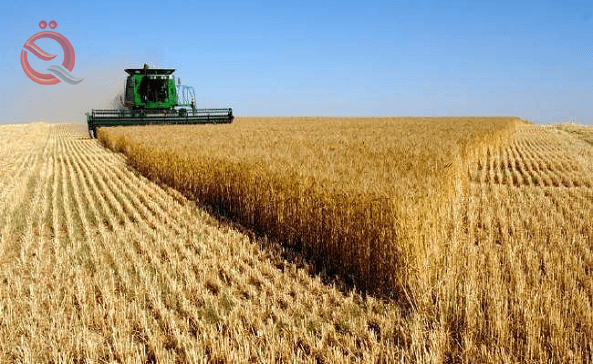 Agriculture allows the movement of wheat and barley crops between governorates 22778