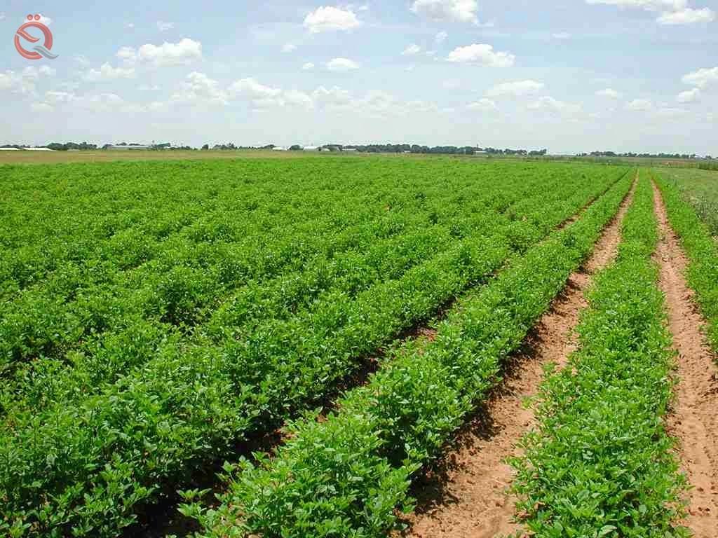 Agriculture: Iraq possesses 30 million dunams of arable land 23120